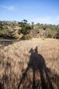 angela pfeiffer fotografin, pferdefotografin hamburg, romantische pferdefotos