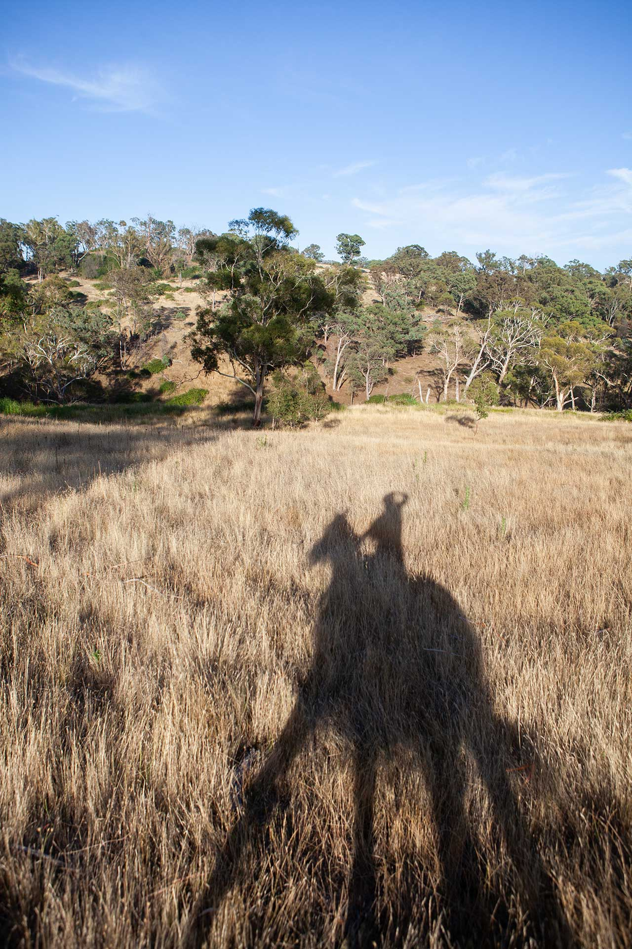 angela pfeiffer fotografin, angela pfeiffer, pferdefotografin, auf tony in australien, pferdefotos, pferdeportraits, authentische pferdefotografie, individuelle pferdefotografie, pferdefotografie in norddeutschland