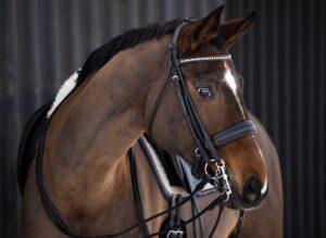 angela pfeifer pferdefotografin, klassisches pferdeportrait, klassisches pferdeshooting, pferdefotografie hamburg, pferdefotografin, portrait pferd,